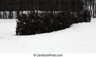 snow fall Full HD - snow fall Full HD progressive video SLR...