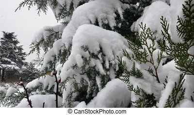 snow fall tree