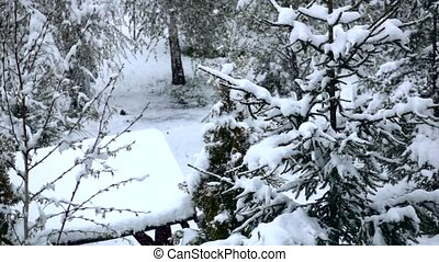 Snow falling and covered fir on winter day. Slow motion