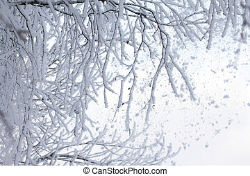 Snow falling from branches