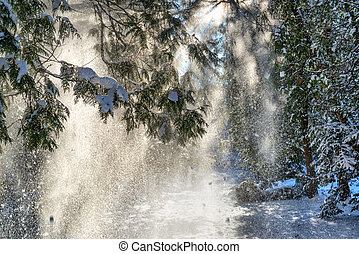 Snow falling from spruce trees