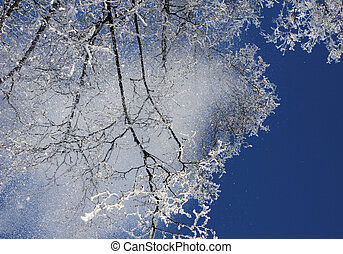 Snow falling from treetops