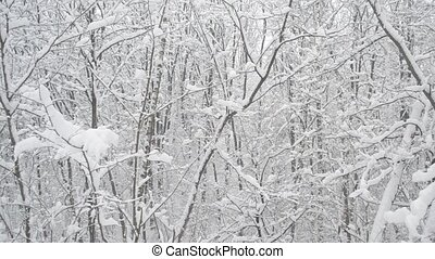 Snow falling in deciduous forest on background of leafless trees