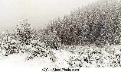 Snow Falling in Forest