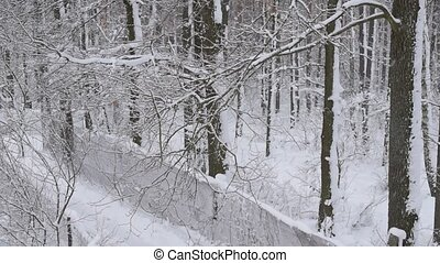 Snow falling in forest with narrow road on white background
