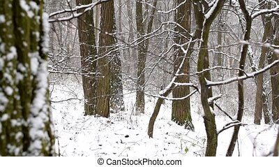 Snow falling in slow motion in leafless deciduous forest...