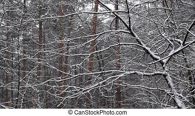 Snow falling in slow motion in mixed forest with tree trunks...