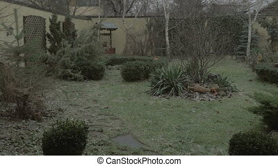 Snow falling in the back yard