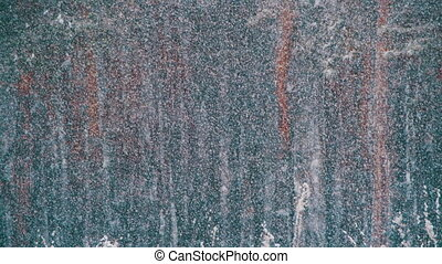 Snow falling in Winter Pine Forest