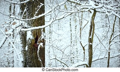 Snow falling on background of tree in forest