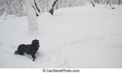 Snow falling on black dog in a snowy forest landscape