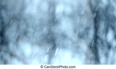 Snow falling on blurry background with trees - Close-up of...