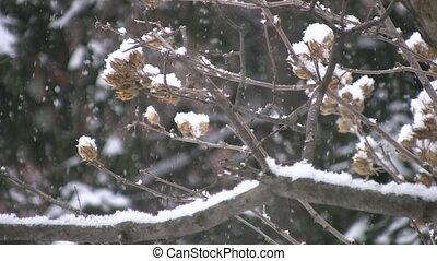 Snow falling on branch.