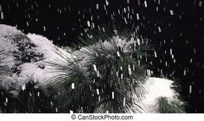 snow falling on evergreen tree