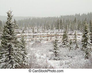 Snow falling on marshland pond in boreal forest - Snow...