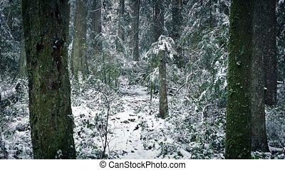 Snow Falling On Path Through Winter Forest