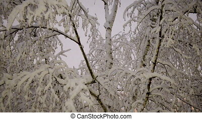 Snow Falling on Trees
