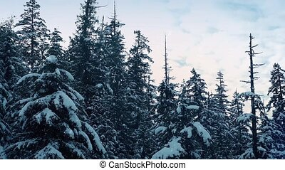 Snow Falling Trees Aerial