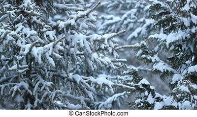 Snow falling with evergreens.
