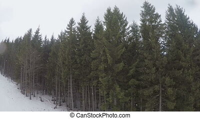 fir trees in ski resort - Snow falls in fir trees in ski...