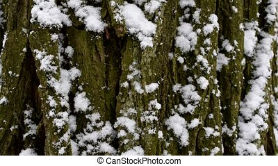 Snow falls in slow motion on background of tree bark