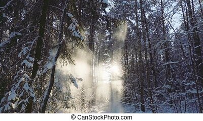 Snow falls in the winter forest, slow motion