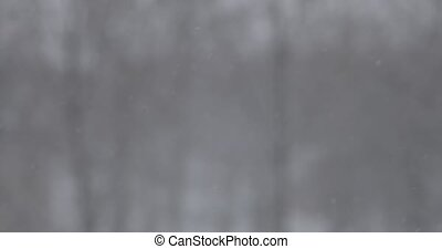 Snow falls on a blurred background of a winter park