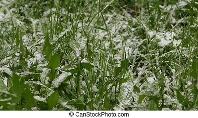 Snow falls on a green grass. Abnormal weather. Falling snow in a park with grass. slow motion