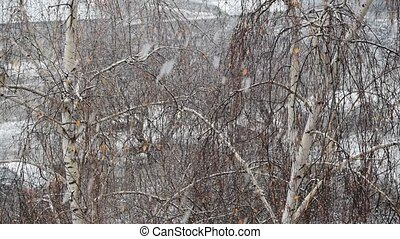 Snow falls on background of birch tree.