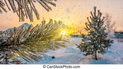 snow falls on hoarfrost pine branches, winter Christmas animation