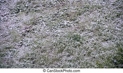 Snow Falls on the Green Grass. Time Lapse - The snow falls...