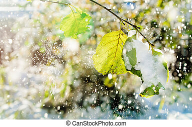 Snow falls on the leaves of the trees lit by sunlight