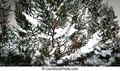 snow falls on tree