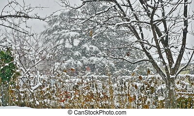snow falls on trees