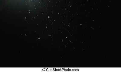 snow falls slowly in night winter