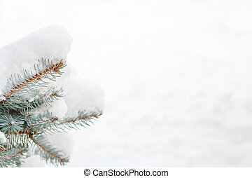 Snow fir tree branch