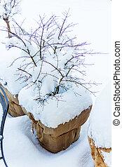 snow flower pots