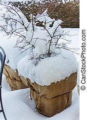 snow flower pots - snowy planter in the garden, symbol photo...