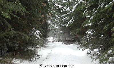snow., forest., bois, hiver, sentier