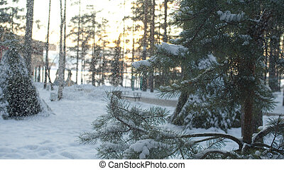 Snow gracefully falls from a branch of spruce