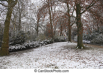 Snow in a park in the fall