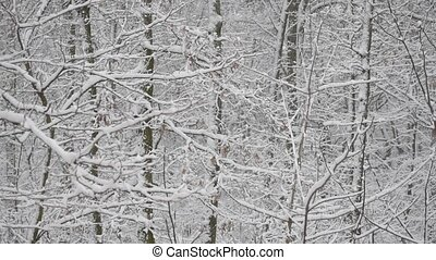 Snow in deciduous forest with snow covered trees in winter