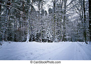 Snow in forest at winter day