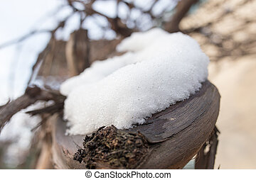 snow in spring in nature