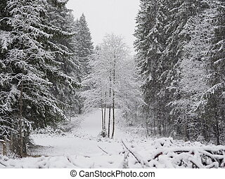 snow in the forest. winter