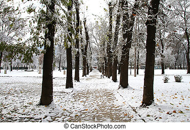 Snow in the Park