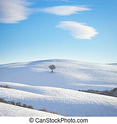 Snow in Tuscany, lonely tree on a rolling hill. Italy