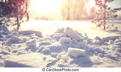 Snow in winter park slowmotion