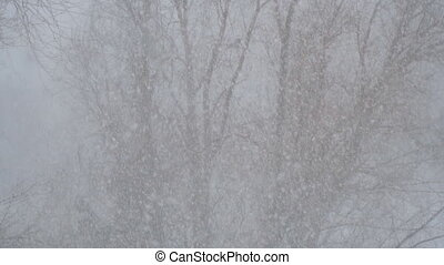 Snow is falling slowly against the tree