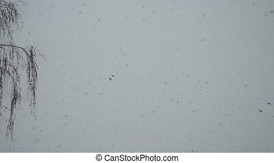 Snow is falling slowly and birds are flying